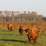 lauwersmeer1